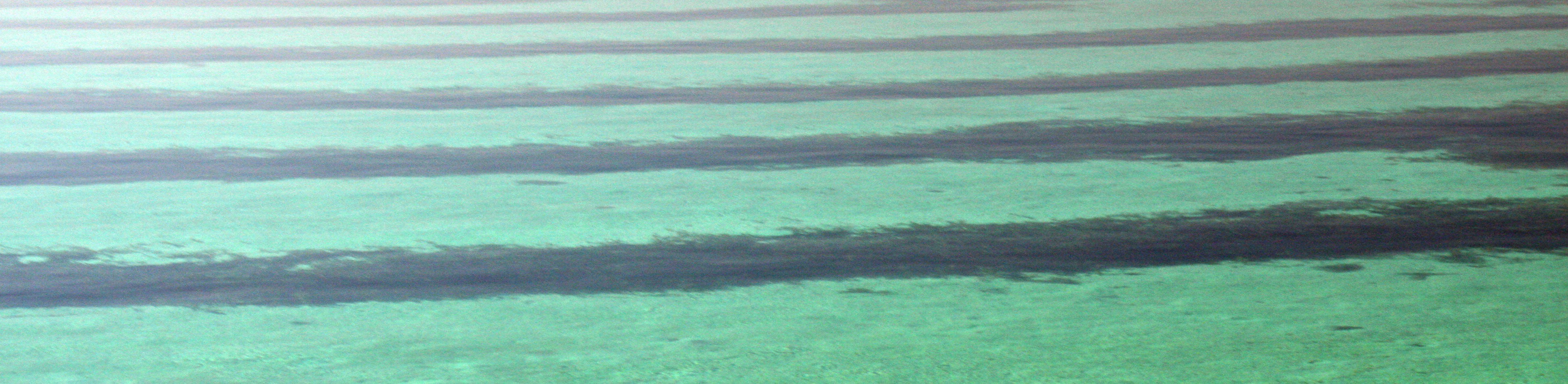 Shark Bay Australia Seagrass Shark Bay Australia